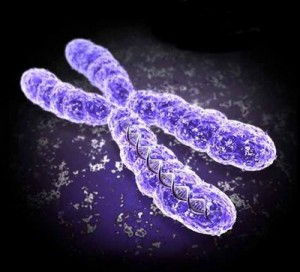 gene-therapy-chromosome