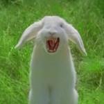 bunnyfangs
